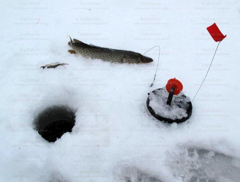 Рыбалка на жерлицу