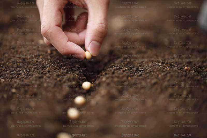 Стратификация семян с помощью грунта