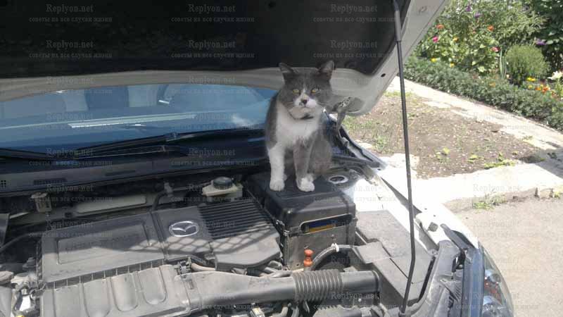 Поднимаем машину